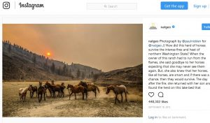 Social Media storytelling at National Geographic